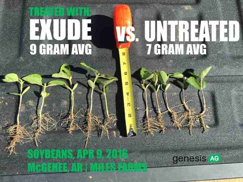 early soybeans fertilized wiht exude liquid starter fertilizer