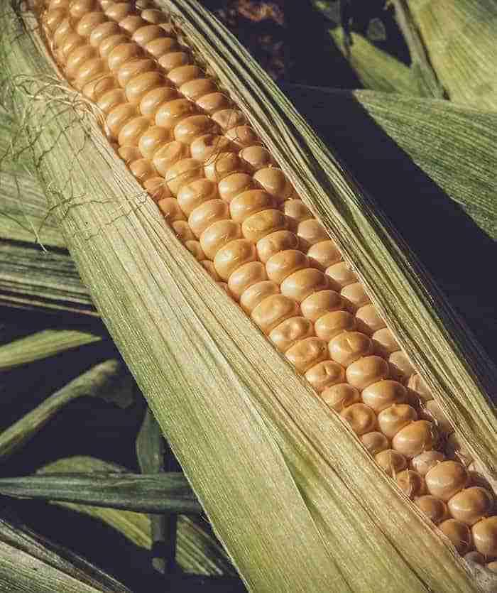 Genesis Ag - Increase Corn Yields